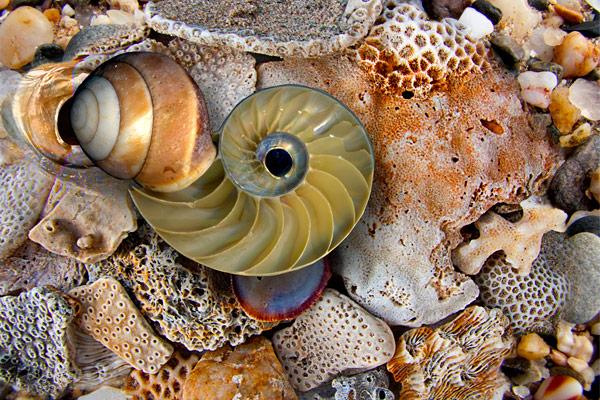 nf106. Nautilus Snail Artcard