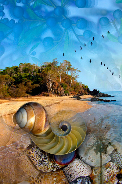 nf106a. Beach Artcard