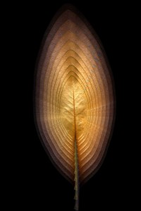 nf14. Leaf Flame Artcard