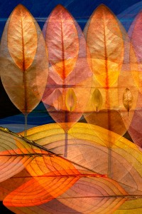 nf1. Natasha's Leaf Artcard