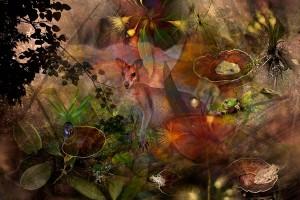 nf241a. Deep Forest Artcard