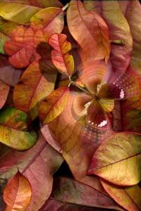nf34a. Autumn Breeze artcard