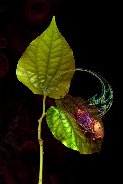 nf45. Cicada Leaf Artcard