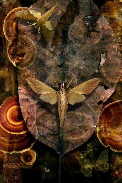nf55. Forest Dance Artcard