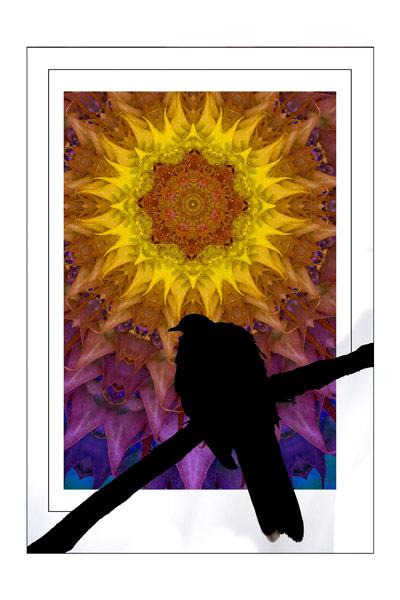 nf70. Sunflower Bird Artcard