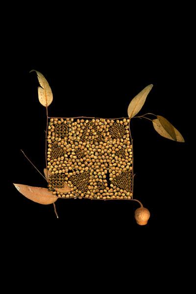 nf83. Wabi Gumnuts Artcard