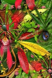 nf151a. Rainforestation Artcard