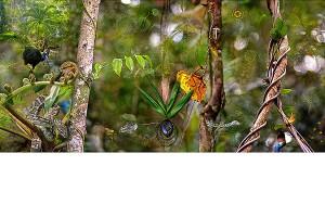 nf155. Forest Scene Artcard