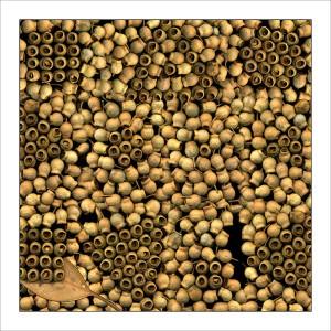 fp33. Gumnuts Fabric Patch
