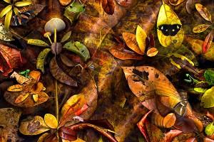 nf208. Leaf Matter Artcard