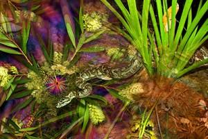 nf220. Carpet Snake Artcard