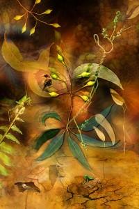 nf232a. Mantis Walk Artcard