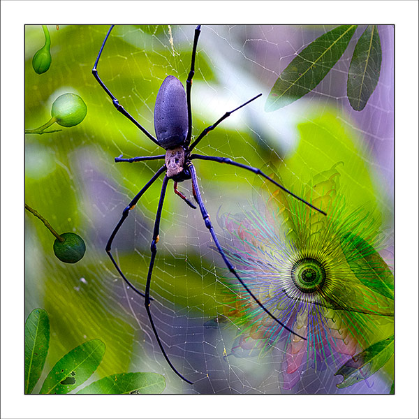 fp85. Golden Orb Weaver Fabric Patch