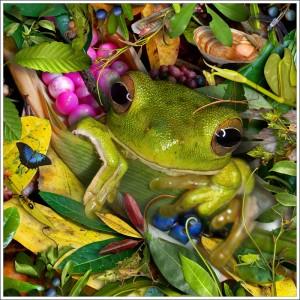 "Baby Green Treefrog 17"" fabric print"