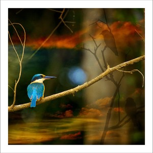 fp102. Kingfisher Fabric Patch