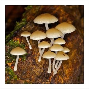 fp111. Mushroom Log Fabric Patch