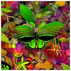 Lfp5a. Birdwing closeup 45x45cm fabric print