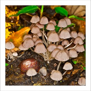 fp139. Mushroom Snail fabric patch