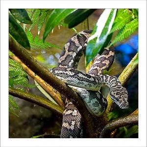 fp174. Jungle Python fabric patch