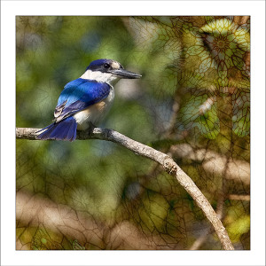 fp236. Forest Kingfisher fabric patch by Gerhard Hillmann
