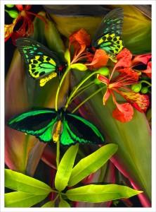 Three Birdwings fabric print