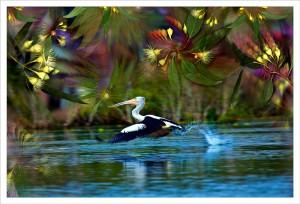 Pelican fabric print