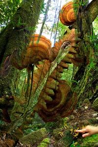 nf284. Primordial Forest Artcard