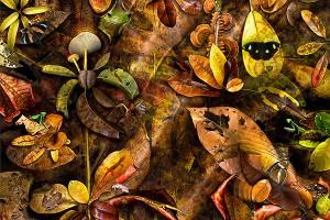 nf286. Matter of Leaf Artcard