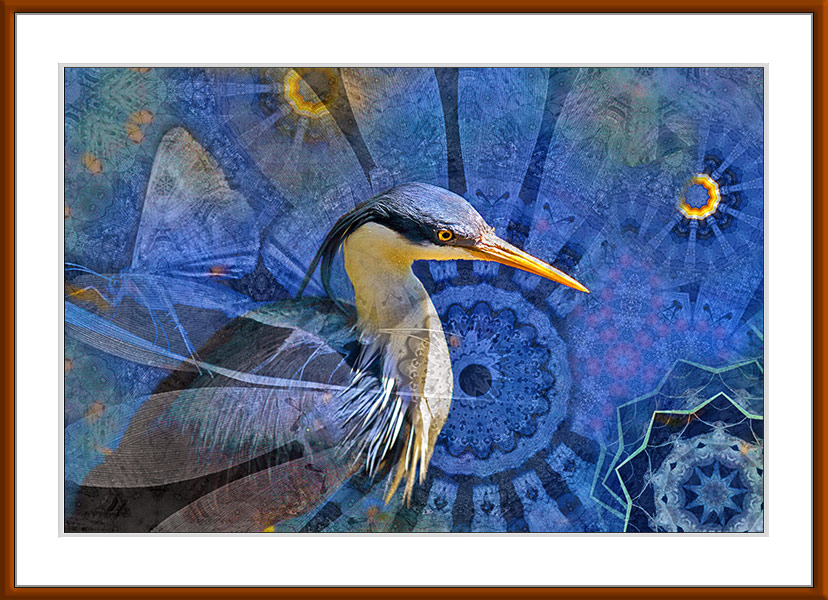 Pied Heron, limited edition by Gerhard Hillmann
