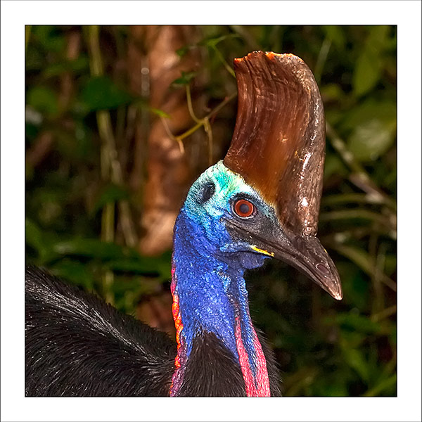 fp247. Cassowary Portrait fabric patch by Gerhard Hillmann