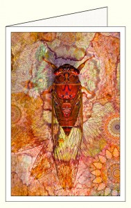 nf364_cicada_red_wo