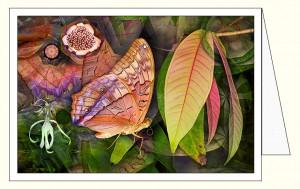 nf369_flutterby_leaf_wo
