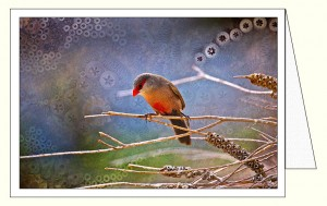 nf377_thinking_finch_wo