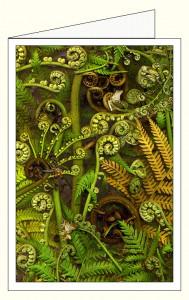 nf388a_green_treefern_wo