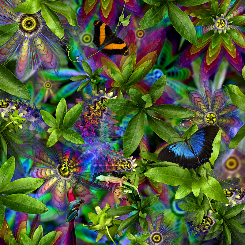Passionflower ...limited edition 50