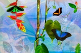 Tropical Horizons Collection 2008