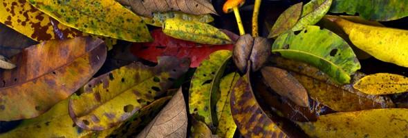 Mushroom Leaves