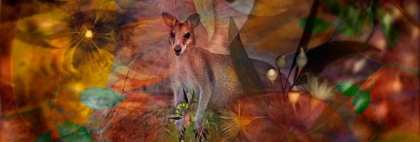 Wallaby Creek…Summer Dayz in the undergrowth