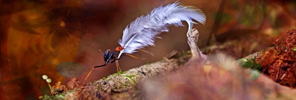Feather Ant