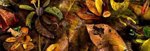Matter of Leaf…artist proof