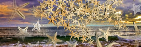 Starfish…New Image…Artist Proof 2013