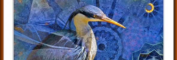 Pied Heron…archival pigment print