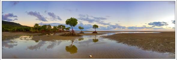 Mangrove Light Panorama