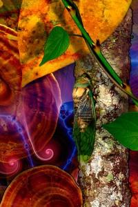 nf117a. Cicada Artcard