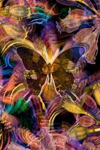 nf37. Butterfly Dawn Artcard