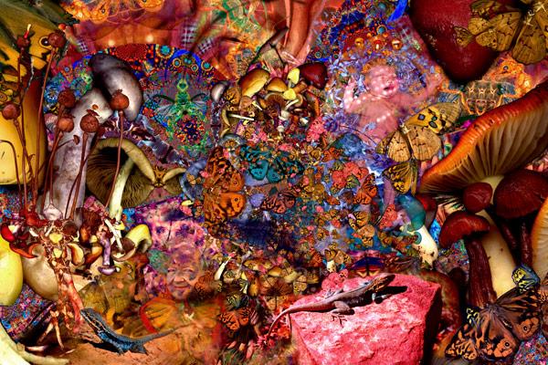 nf41. Mushroom Dreaming Artcard