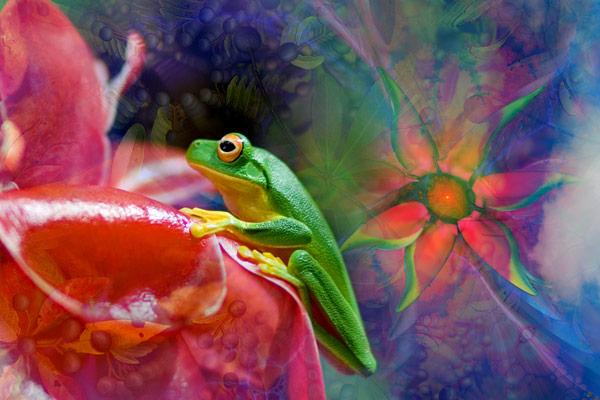nf69. Greenfrog Artcard