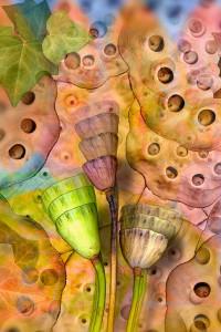 nf6. Lotus Artcard
