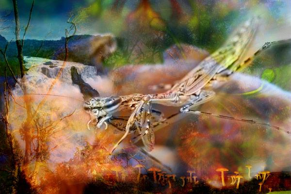nf79. Mantis Falls Artcard