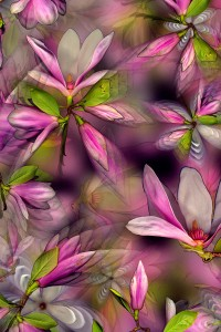 nf.9 Magnolia Artcard
